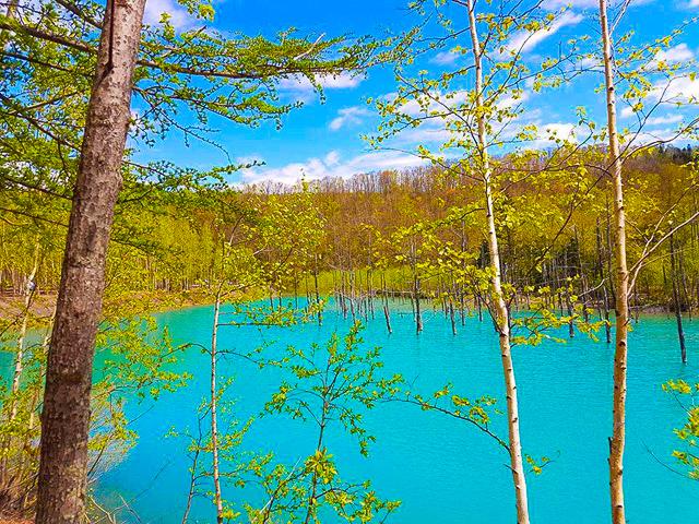 青い池の青差の理由は