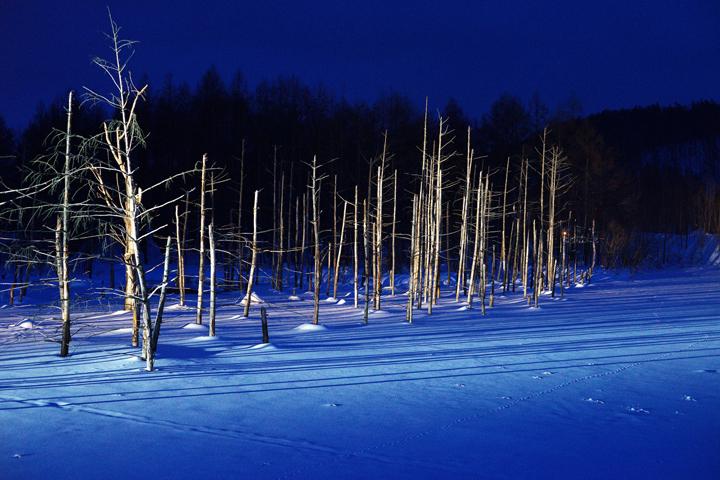美瑛 青い池 ライトアップ