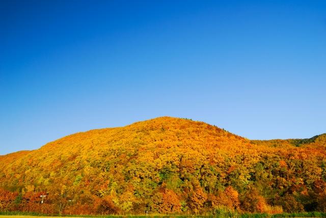秋の富良野